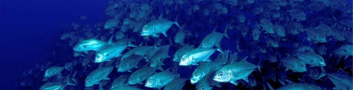 INSIGHTS FROM WRIGGLING FISH MAY IMPROVE ROBOTDESIGN